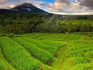 Наслаждение Бали - день 8