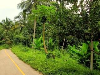Путешествие в Камбоджу и Таиланд: День 6
