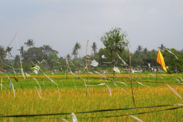 bali_september_2012 (12)