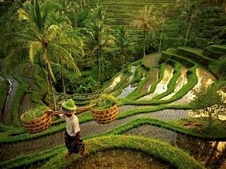 Ниепи на Бали: март 2013 - день 2