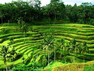 Тур на Бали и Яву: групповое путешествие - Ноябрь 2013 | День 9
