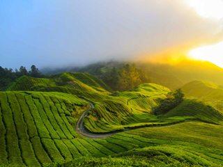 Групповое путешествие в Малайзию - Тур в Январе 2014 - День 4