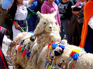 Эквадор - путешествие к центру земли | День 14