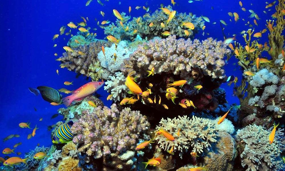 Подводный мир острова Менджанган