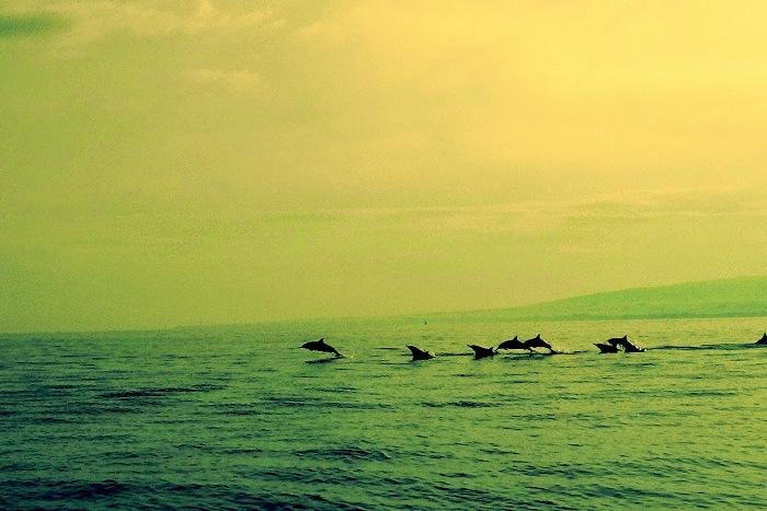 Дельфины Ловины