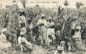 На уборке сахарного тростника, Ямайка