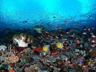 Приключенческий тур на Бали, Январь 2014 - День 6