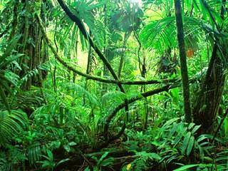 jungle_malaysia_day-6