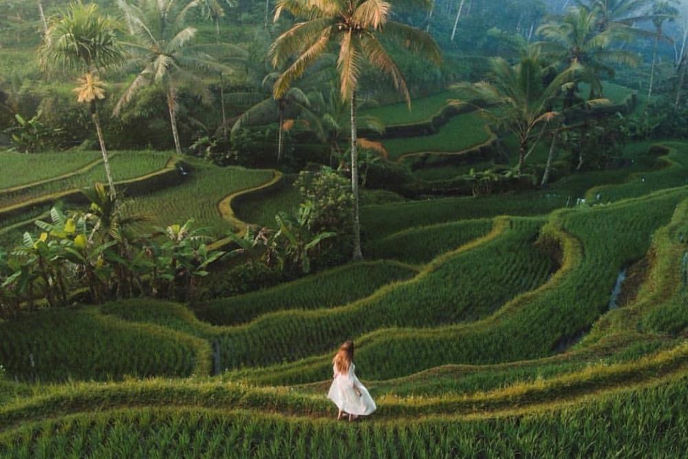 Тур Бали Ява - рисовые террасы Тегалаланг
